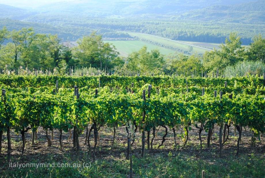 italy on my mind-italian food blog-vines