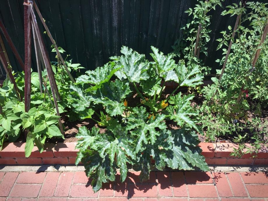 mamma's vegetable garden