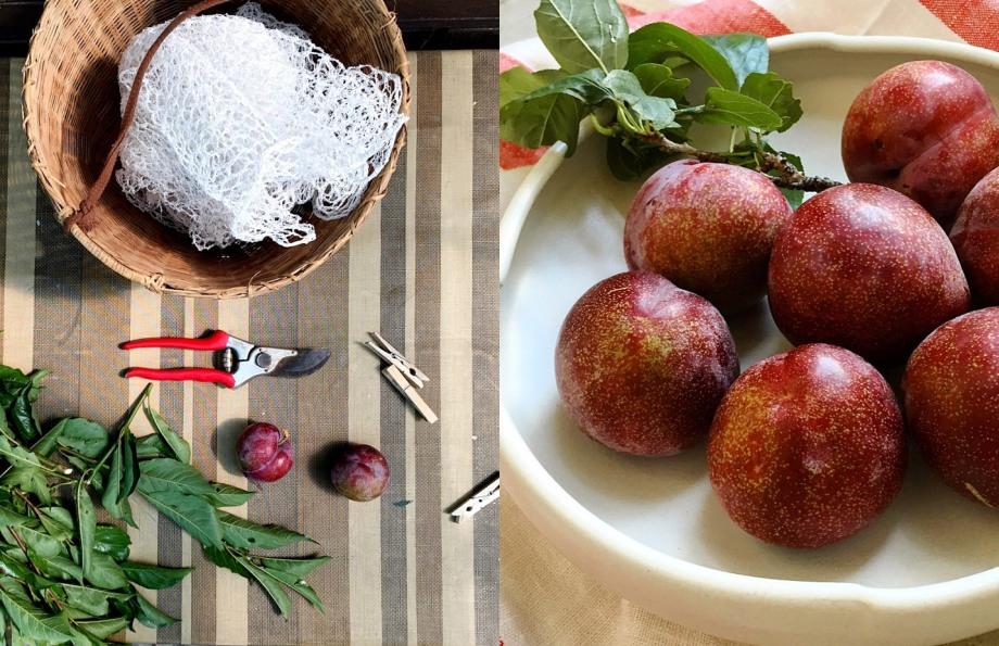 mamma's plums-italy on my mind